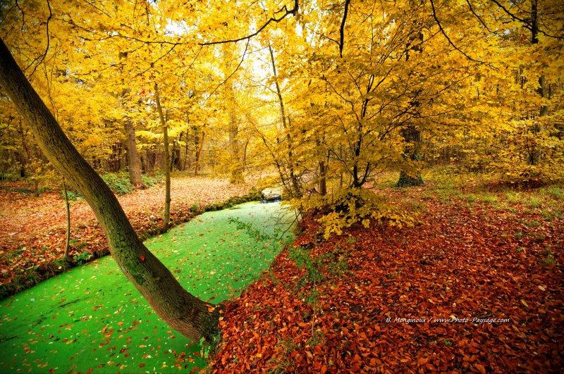 Automne au bord d'un des canaux du bois de Vincennes (Paris, France)