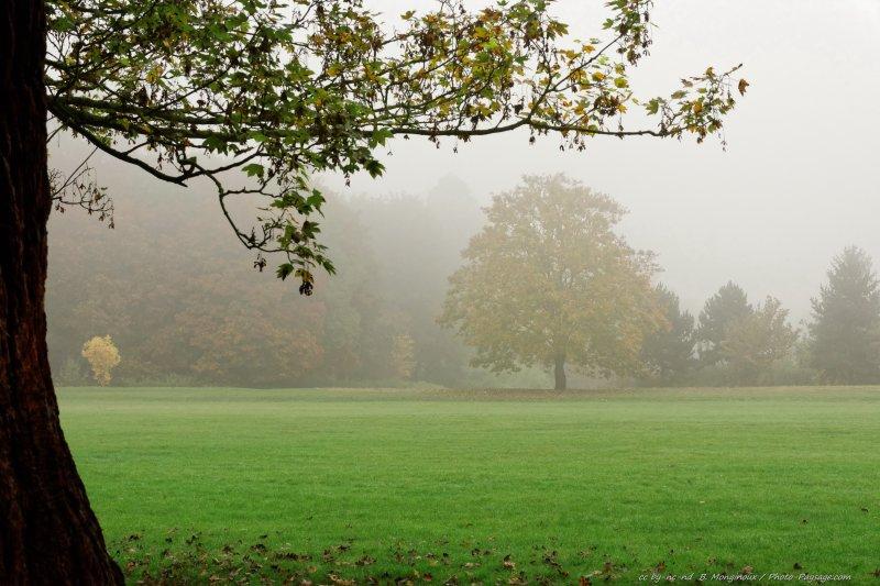 Un arbre dans le brouillard d'automne.