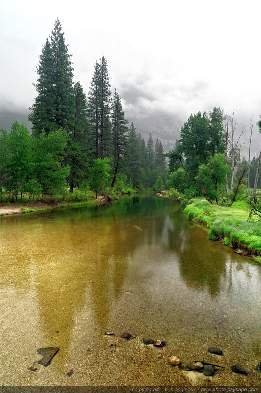 Brume sur la Merced river