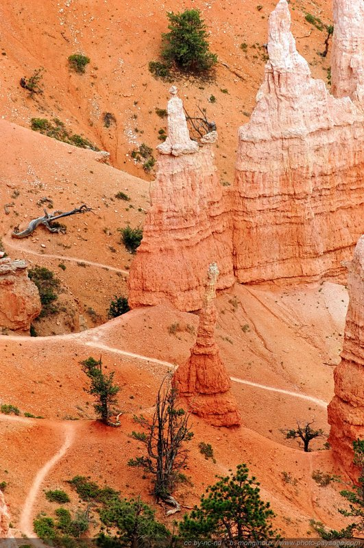 Bryce Canyon -  Des sentiers serpentent entre les Hoodoos - Bryce Canyon National Park, Utah, USA