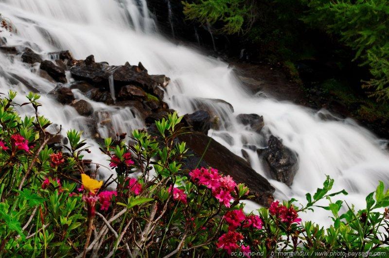Cascade et buisson en fleurs dans les Ecrins, Hautes-Alpes