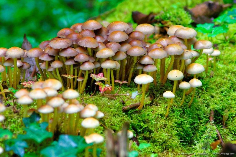 Mousse et champignons sur un tronc d 39 arbre mort photos d 39 automne - Champignon sur tronc d arbre ...