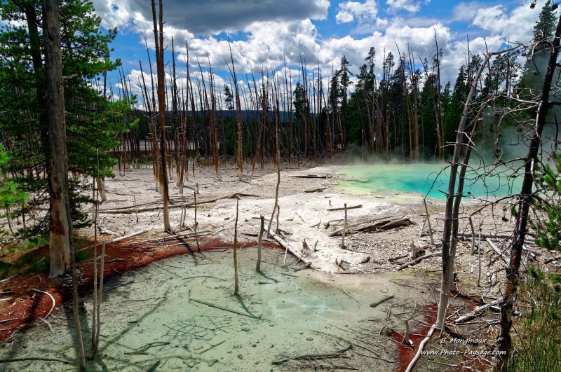 Cistern spring, Norris geyser basin . Parc national de Yellowstone, Wyoming, USA