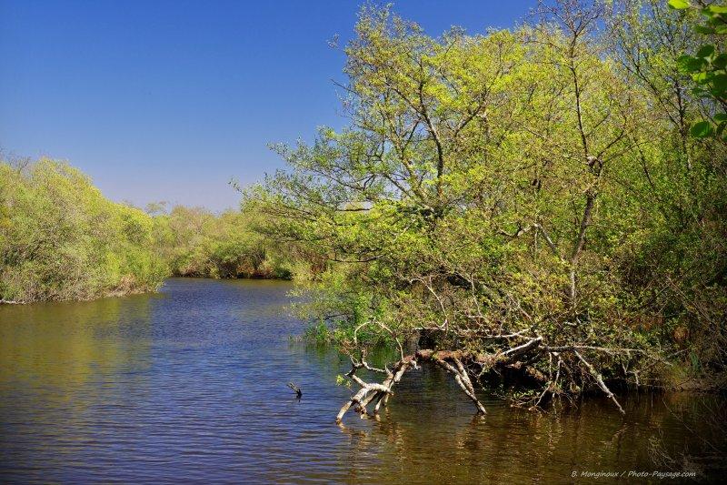 Lorsque l'on finit de remonter le courant d'Huchet, on tombe sur des marécages, juste en aval du lac de Léon.