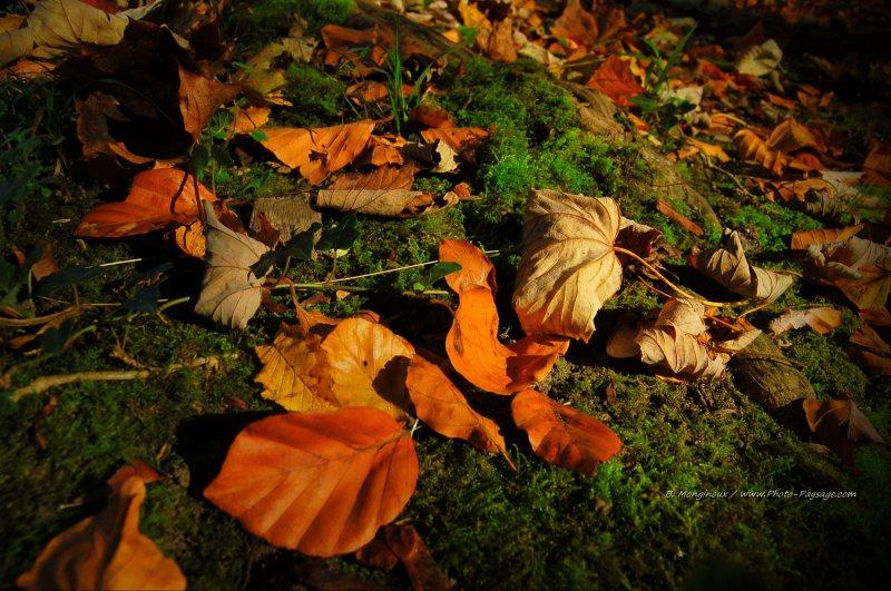 Feuilles mortes sur un lit de mousse au pied d'un arbre, sous la lueur d'un rayon de soleil d'automne...