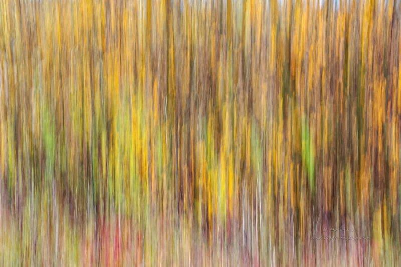Ici, j'ai utilisé quasiment les mêmes paramètres de prise de vue : temps d'exposition d'1/4 de seconde, focale à 32mm, mais ouverture à f13. La seule différence concerne le point de vue (les buissons et la base des arbres).