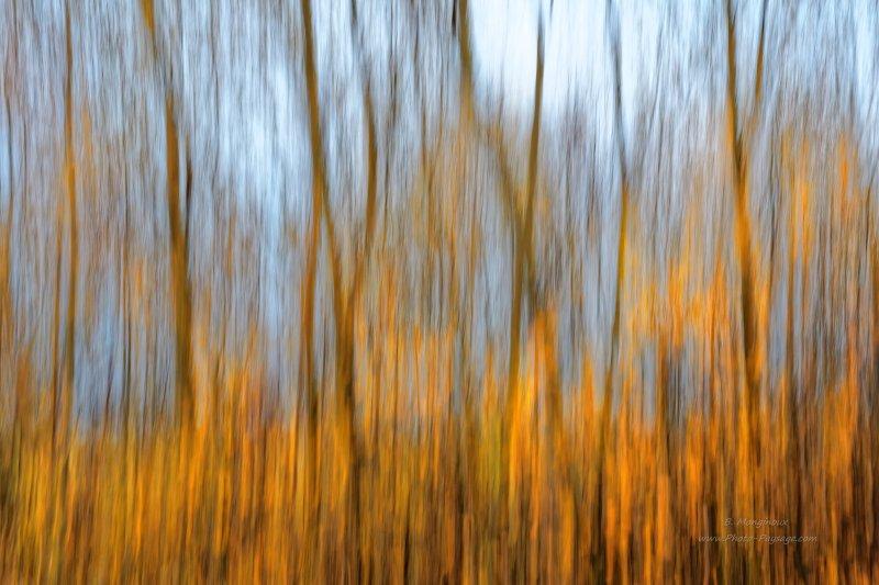 Effet de filé vertical d'arbres en automne. En débutant le mouvement du bas vers le haut, j'ai pris ici la peine de conserver dans l'image les buissons colorés avec leurs feuillage automnal bien doré à la base des arbres. Le temps de pose d'1/4 de seconde nous donne un effet de filé pas trop marqué, qui laisse deviner la forme des arbres et de leurs branches. Nikon D7200 + Sigma 17-70 (34mm f20 1/4s)