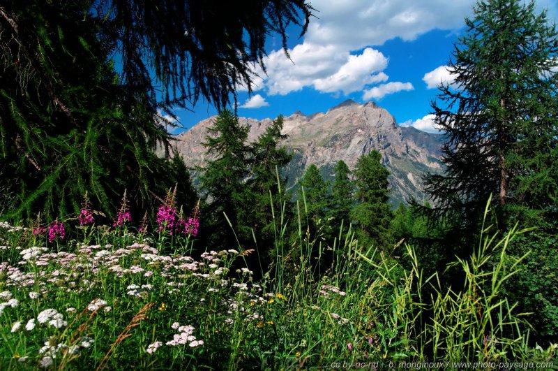 fleurs de montagne massif des ecrins al pays des ecrins hautes alpes. Black Bedroom Furniture Sets. Home Design Ideas
