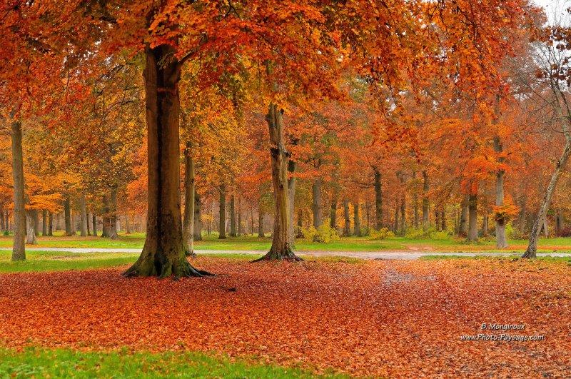 Jour d'automne sous la pluie -02 - Forêt d'Ermenonville, Oise