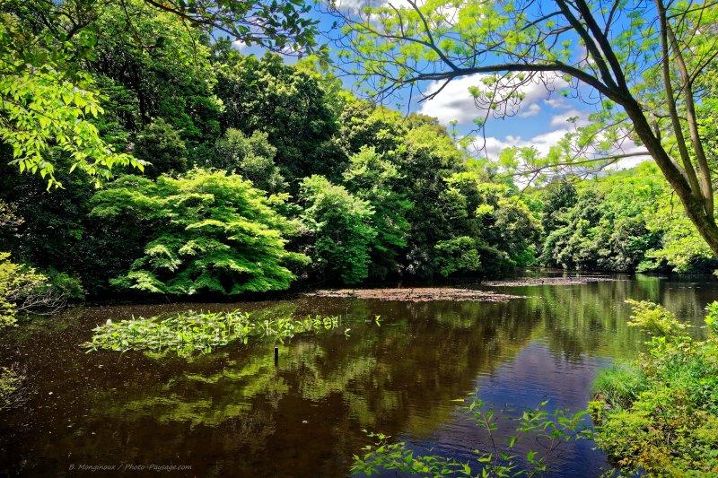 Un petit lac dans le jardin imp rial yoyogi gyoen jardin for Jardin imperial
