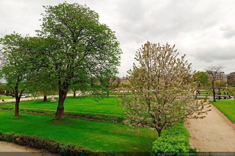 Le printemps dans le jardin des tuileries paris for Le jardin des fleurs paris