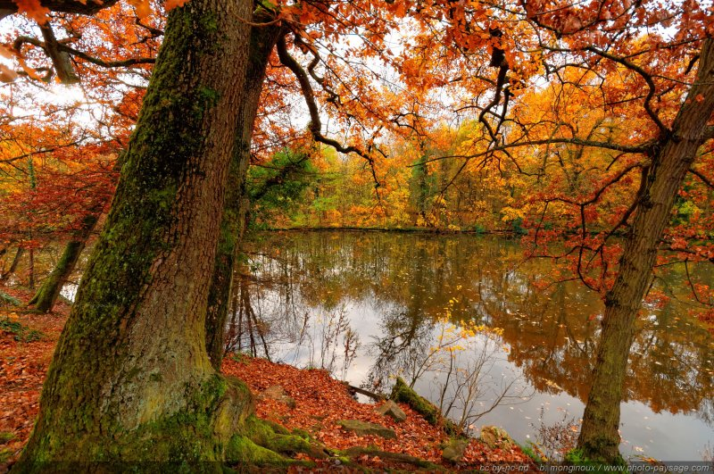 les couleurs de l 39 automne dans le bois de vincennes photo le blog. Black Bedroom Furniture Sets. Home Design Ideas
