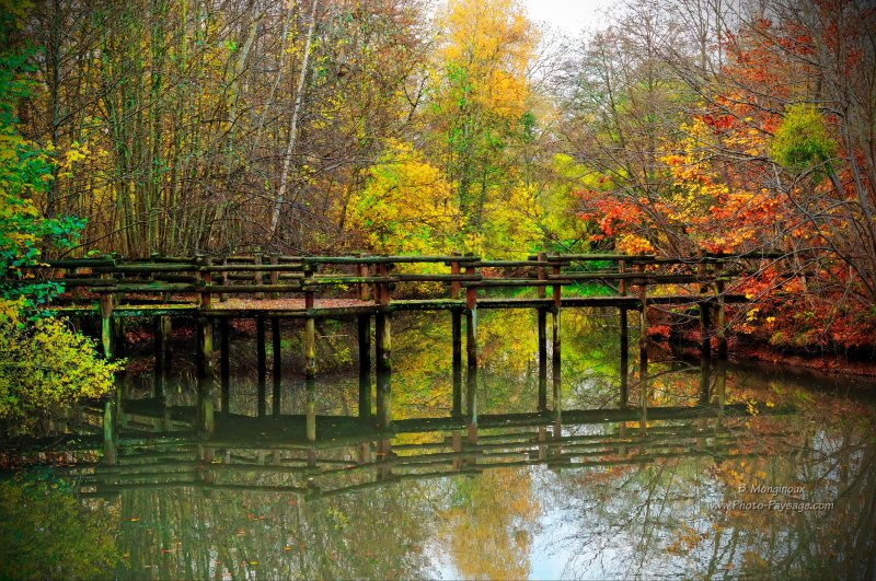 Un pont  en bois se reflète à la surface de l'étang