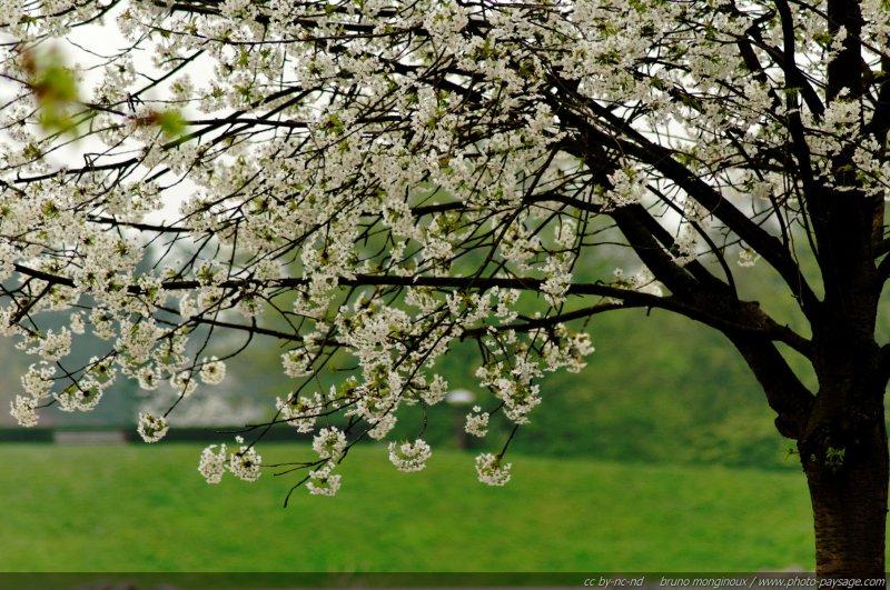 Arbre en fleurs le printemps est l le printemps en image - Arbre fleurs rouges printemps ...