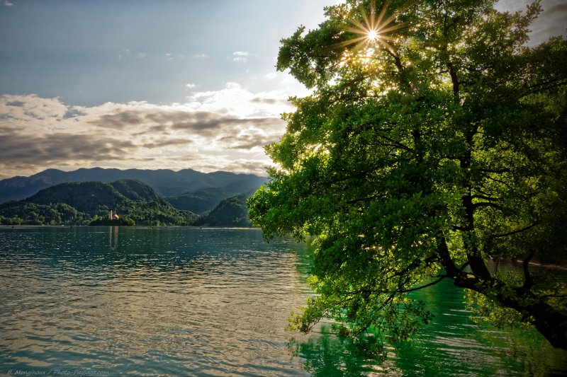 Les rayons du soleil passent à travers le feuillage d'un arbre au bord du lac de Bled en Slovénie.