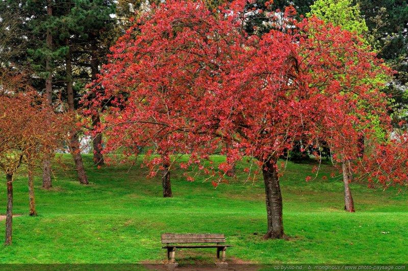 arbre pommier