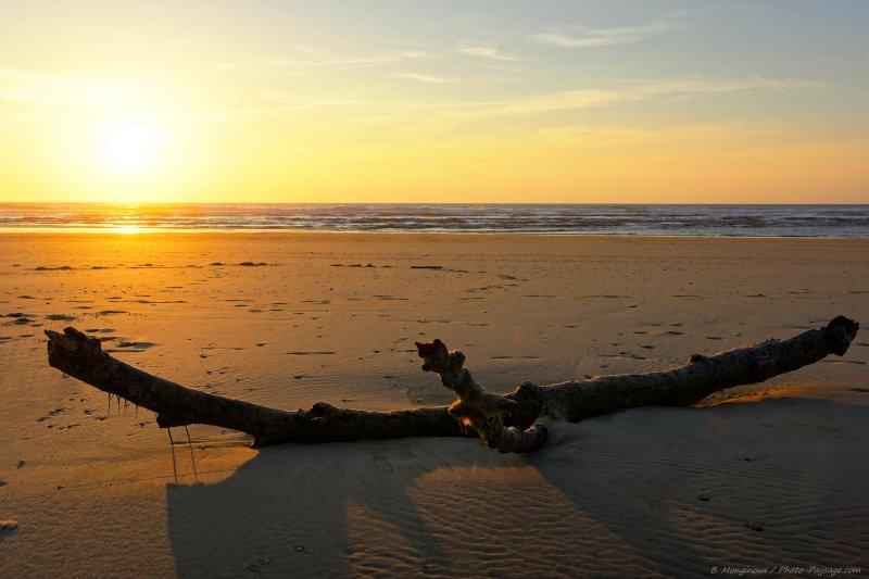 Un arbre mort, recouvert de quelques algues, photographié à marée basse face à l'océan Atlantique au coucher du soleil sur la plage de Moliets-et-Maâ sur la côte landaise.