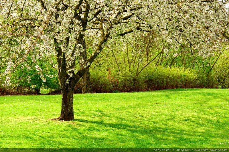 Fonds D Ecran Images De Nature Fleurs Photo Paysage Com