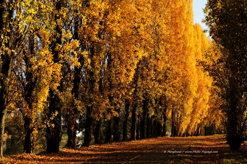 normal Une allee de peupliers en automne The best landscape photos of 2011