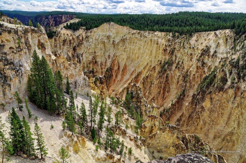 Les magnifiques couleurs contrastées du grand canyon de Yellowstone : du jaune clair des falaises au vert des forêts de conifères, en passant par endroit par des teintes oranges ou rouges.