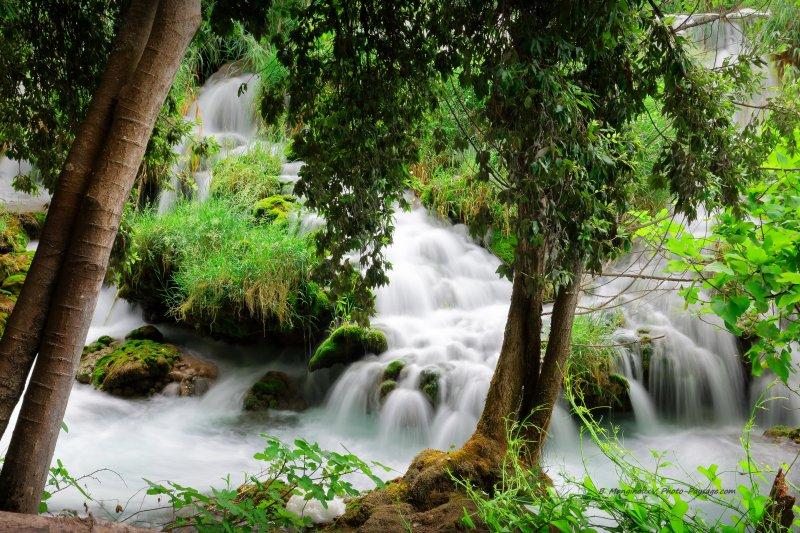 Une des nombreuses cascades que l'on peut rencontrer dans le parc de Krka, en Croatie. Ruisseaux qui tombent en cascades au milieu de mousses, touffes d'herbe, et d'arbres.