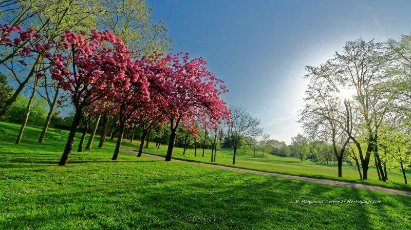cerisiers en fleurs photographi s un matin de printemps images de printemps. Black Bedroom Furniture Sets. Home Design Ideas