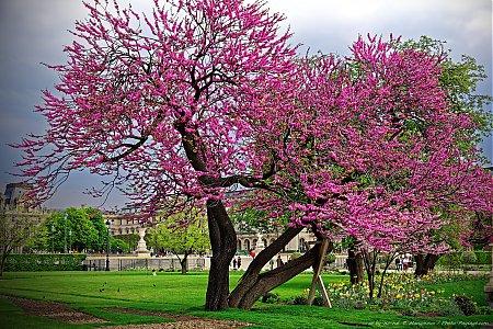 Les parcs jardins et espaces verts parisiens photo - Photo d arbre a imprimer ...
