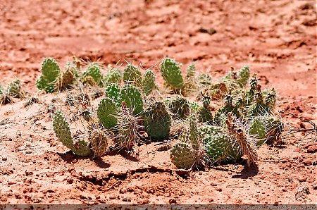 Cactus-dans-Arches-National-Park---2.jpg