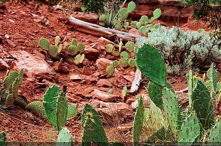 Cactus dans Zion National Park - 1