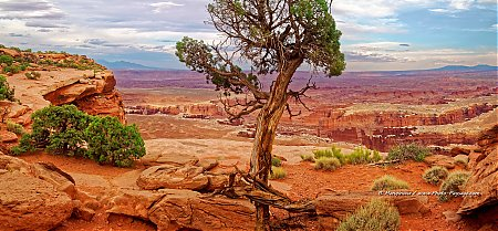 Panorama sur Canyonlands vu depuis le sentier qui longe le bord de la falaise