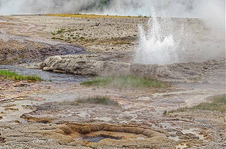 Cliff Geyser dans le Black sand basin