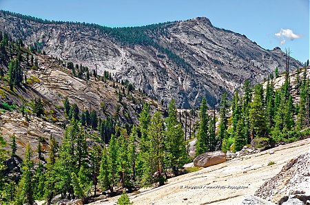 Coniferes et granite, sur les hauteurs du parc de Yosemite