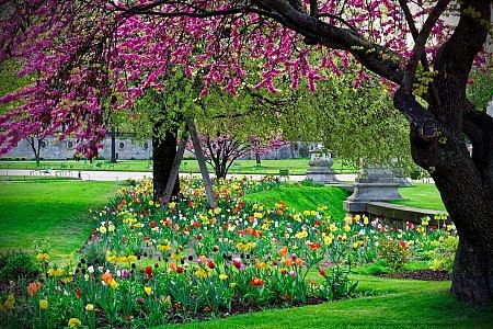 thumb_Explosion-de-couleurs-printanieres-dans-le-jardin-des-Tuileries