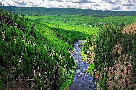Gibbon river