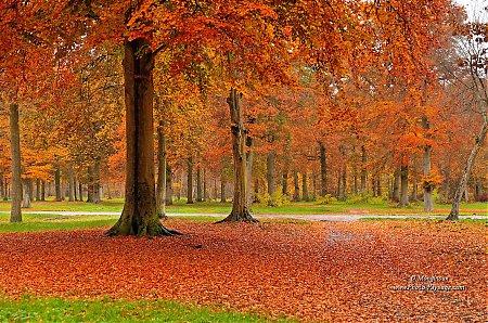 foto de Accueil > Images de nature > Les forêts - Photo-Paysage.com Photo ...