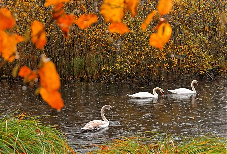 l automne c est les couleurs de mandine