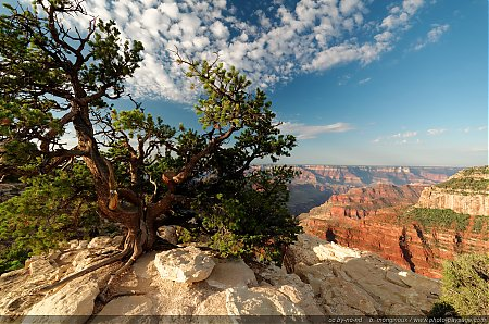 Le-Parc-National-du-Grand-Canyon---North-Rim.jpg