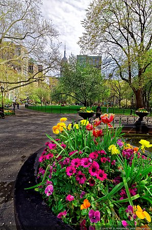 Le-printemps-a-Madison-Square-park---1.jpg