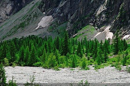 Une forêt au fond de la vallée dans le pré de Mme Carle - 05 Pré de Mme Carle / Réserve naturelle de la Haute Vallée de St Pierre (Parc Naturel des Ecrins)