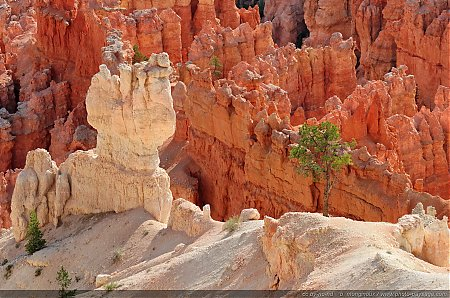 Les couleurs contrastées des Hoodoos de Bryce Canyon