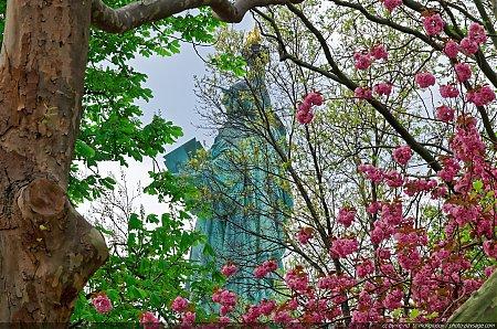 Arbres en fleurs photo paysage com - Couleur du printemps ...