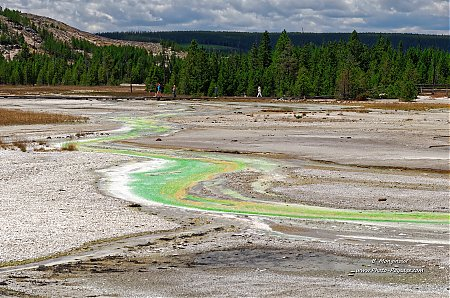 Les-sources-thermales-s_ecoulent-en-ruisseaux-colores-par-algues-et-bacteries-----Norris-geyser-basin---Yellowstone.jpg