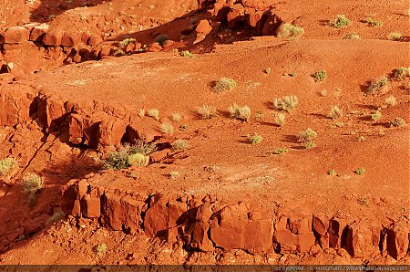 Monument-Valley-une-vegetation-rare.jpg