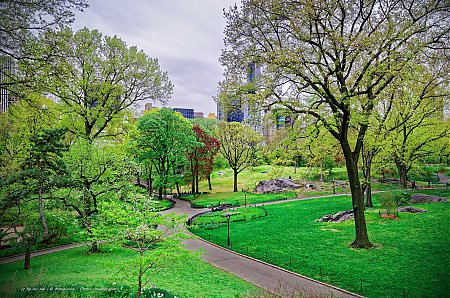 Nature urbaine dans le sud de Central Park