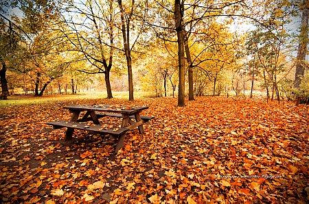 Pique-nique-d-automne-dans-le-bois-de-Vincennes.jpg