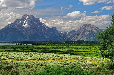 Prairie dans le parc national de Grand Teton