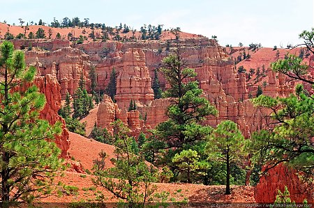 Red-Canyon---09.jpg