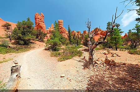 Red-Canyon---des-Cairns-poses-sur-un-arbre-mort.jpg