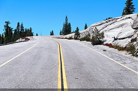 Tioga Road