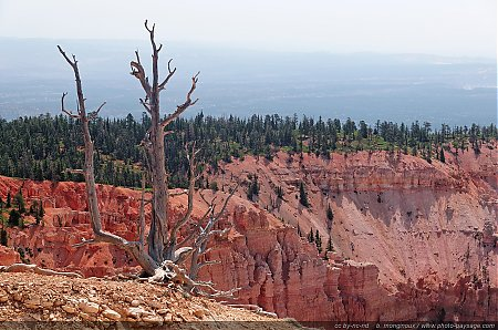 Un arbre mort au bord de la falaise